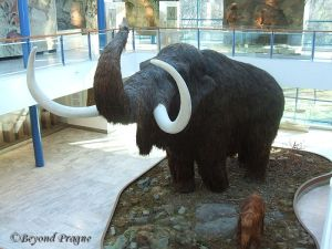 Mammoth diorama in atrium.