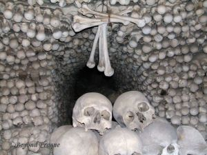 Bones, bones and more bones.