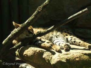 Siesta time at the zoo
