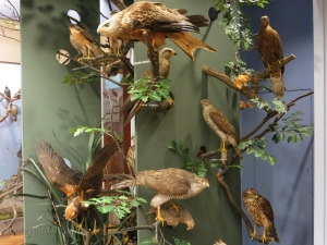 A selection of predatory birds which can be found in the Czech Republic