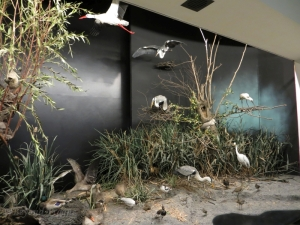 Part of a large diorama of  wetland birds.