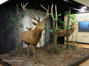 One of several dioramas in the museum's mammal  gallery.